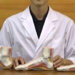 正常な足・扁平足・凹足,骨や筋などの内部構造を観察できる模型