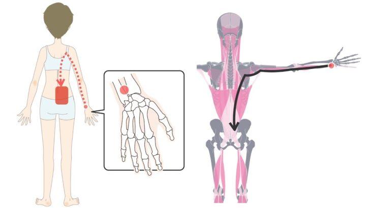 腰痛に効くツボが手首に?筋肉が固くて奥まで届かない人に動きながら腰をラクにする方法