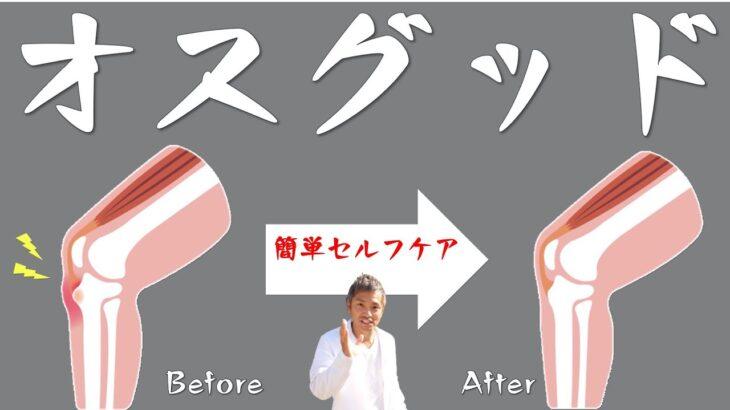 【小・中学生向け】自宅でオスグッド病・ひざ痛の治す【ストレッチは絶対ダメ】