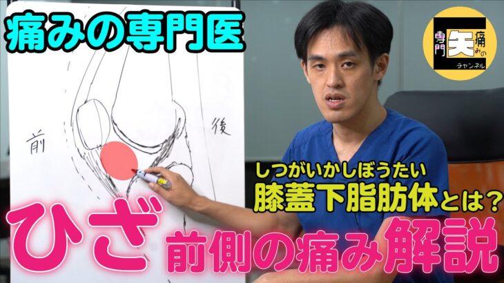 【ひざ痛】前側の痛みを解説!膝蓋下脂肪体(しつがいかしぼうたい)とは?