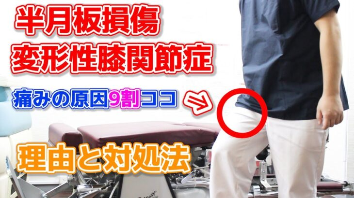 【半月板損傷、変形性膝関節症】治したかったらここに注目しよう!