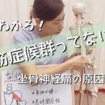2分でわかる!〜梨状筋症候群〜#レフア#上北沢#梨状筋症候群#坐骨神経痛