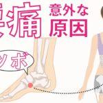 腰痛(背骨に近いところ〜お尻)の意外な原因 ツボ