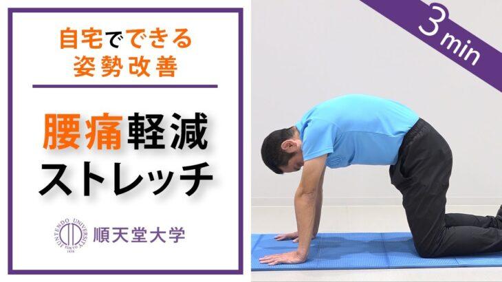 【腰痛軽減】2分間の腰伸ばしストレッチ(キャットアンドドッグ、姿勢改善)