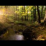 【吐き気やめまい、腹痛などを和らげる気持ち悪い時に聞く音楽】セラピーリラックスMV Original Therapy Relax Music Video #170