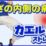 【ひざ痛】ひざの内側が痛むときのストレッチ