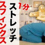 【腰痛改善】スフィンクスストレッチ!寝る前1分のナイトルーティンで坐骨神経痛も改善♪