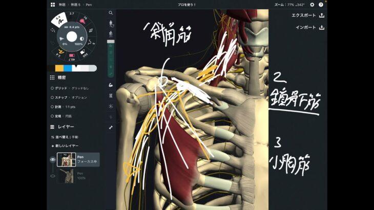 肩の動きと胸郭出口症候群